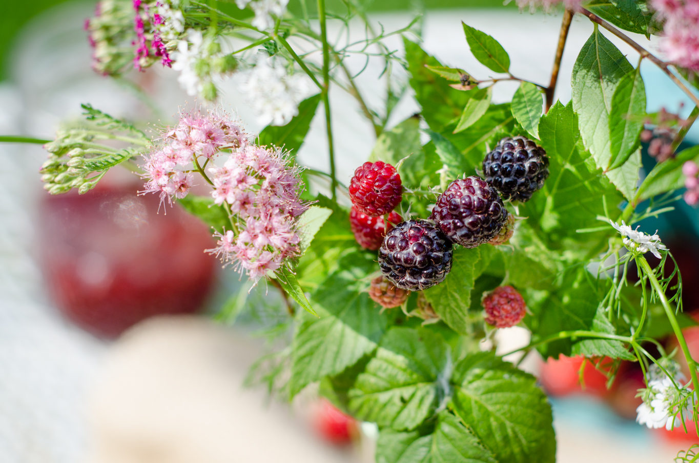 Blackberries & Flowers